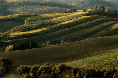 Rolling hills of the Chianti. Tuscan Hill Towns tour